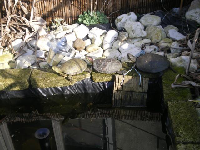 mon bassin Imgp2210