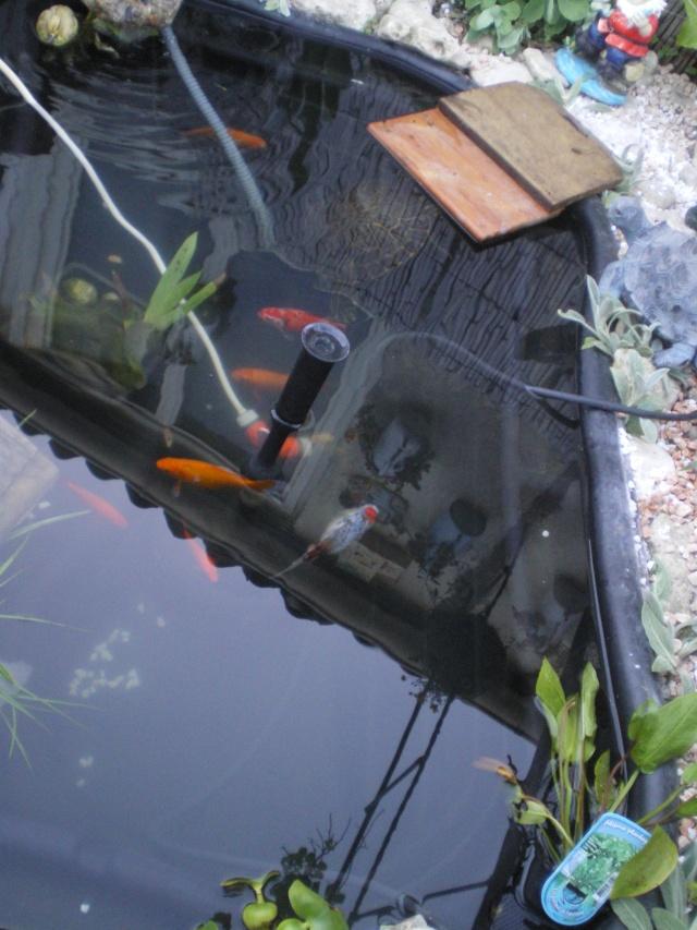 mon bassin Imgp4121