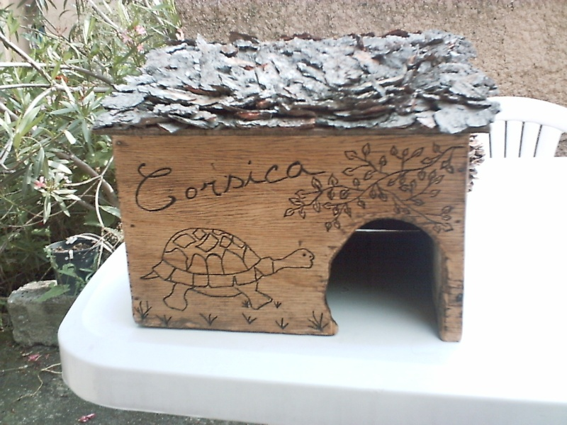 maison de mes tortues Pict0016