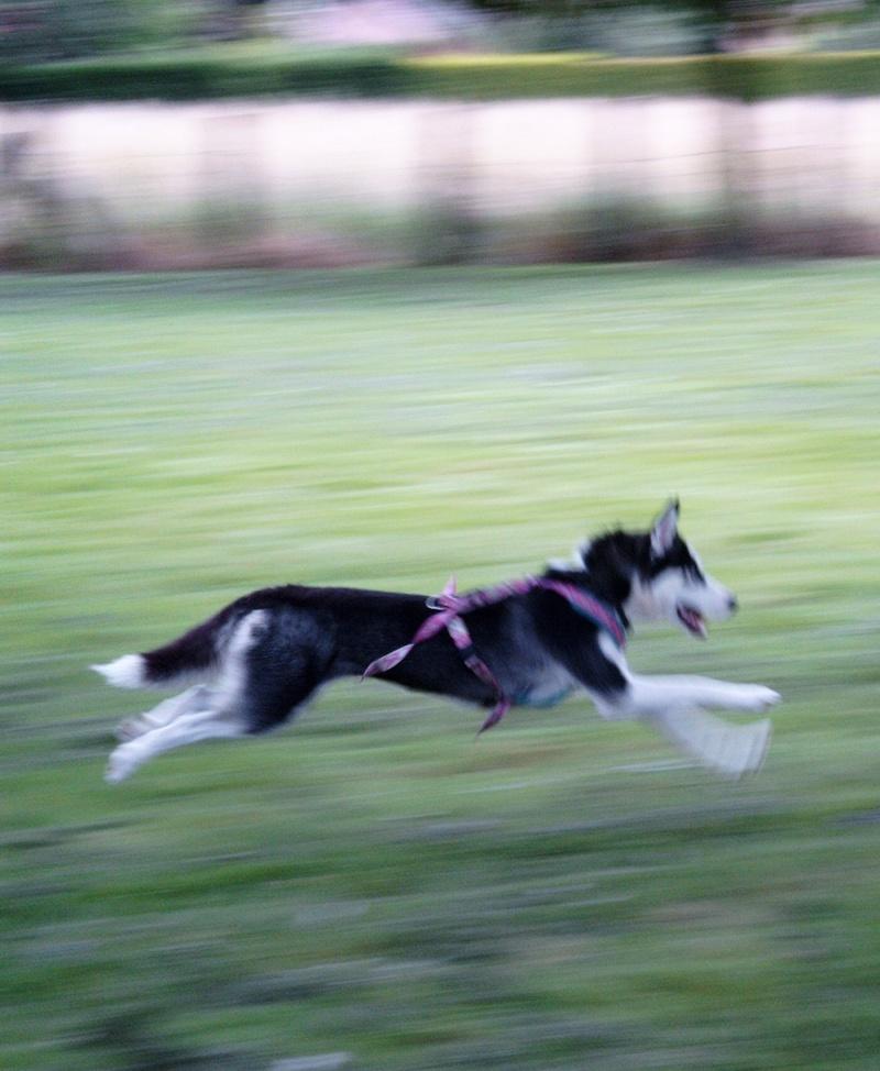 Nos loups grandissent, postez nous vos photos - Page 4 Simg0510