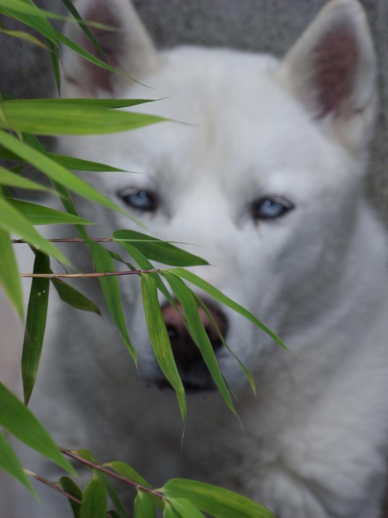 Nos loups grandissent, postez nous vos photos - Page 4 Sn850210