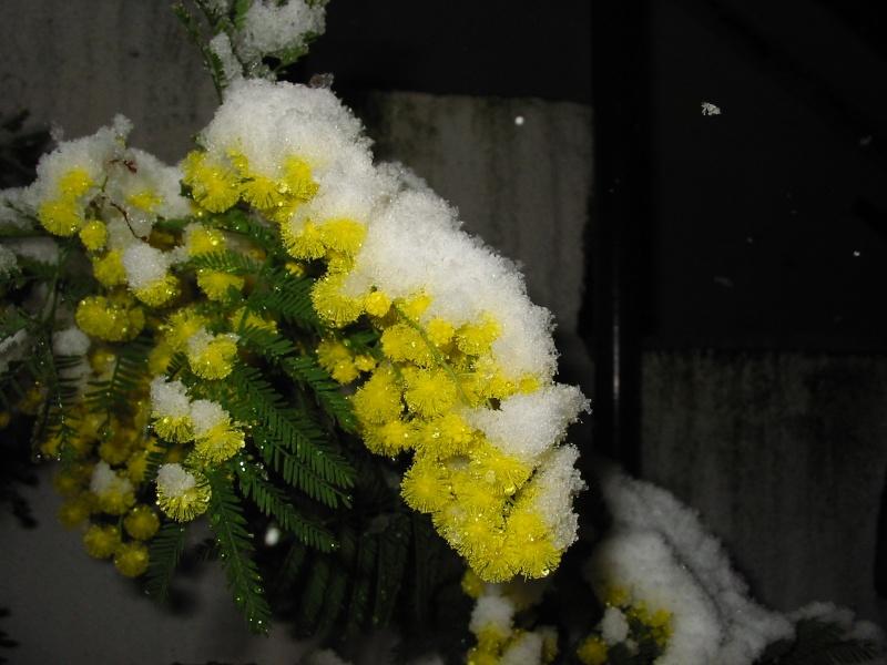un peu de printemps.. Img_0014