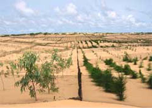 La Grande Muraille Verte (GMV) en Afrique subsaharienne Dyn01010