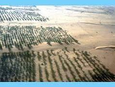 La Grande Muraille Verte (GMV) en Afrique subsaharienne E425e110