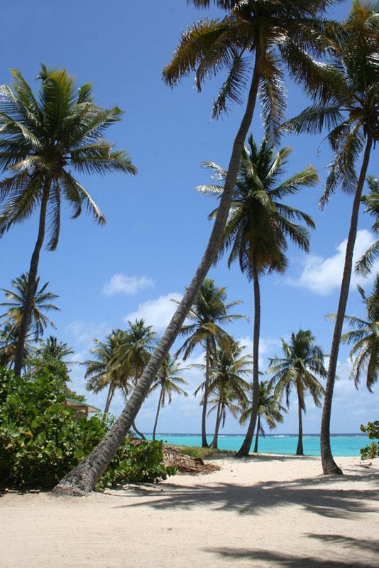 Les îles de la Caraïbe - Page 3 Plage-10