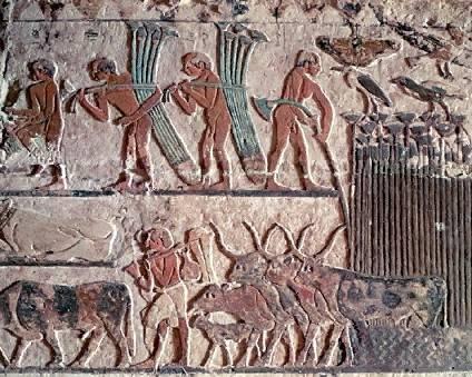 تاريخ مصر القديمة من عصر بداية الاسرات الي الدولة الحديثة واشهر ملوكها  08010
