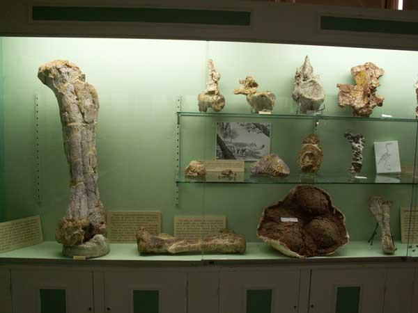 كل شيء عن الدايناصورات بالصور والفيديو 1410