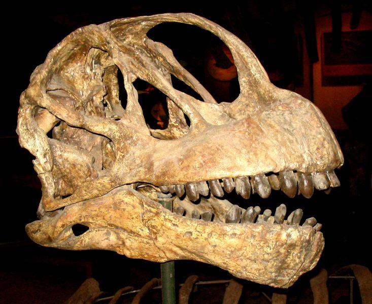 كل شيء عن الدايناصورات بالصور والفيديو 1_1110