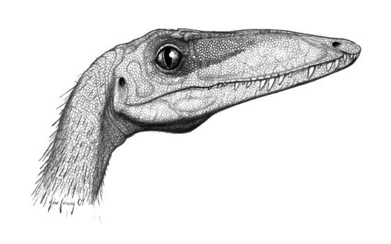 كل شيء عن الدايناصورات بالصور والفيديو 1_1210