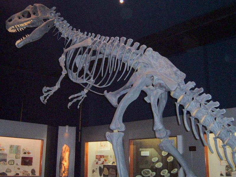 كل شيء عن الدايناصورات بالصور والفيديو 1_1610