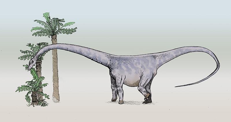 كل شيء عن الدايناصورات بالصور والفيديو 1_1710