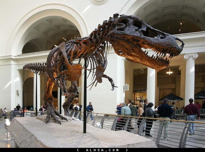 كل شيء عن الدايناصورات بالصور والفيديو 1_2010