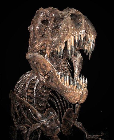 كل شيء عن الدايناصورات بالصور والفيديو 1_210