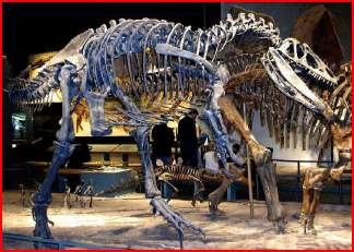 كل شيء عن الدايناصورات بالصور والفيديو 1_2910