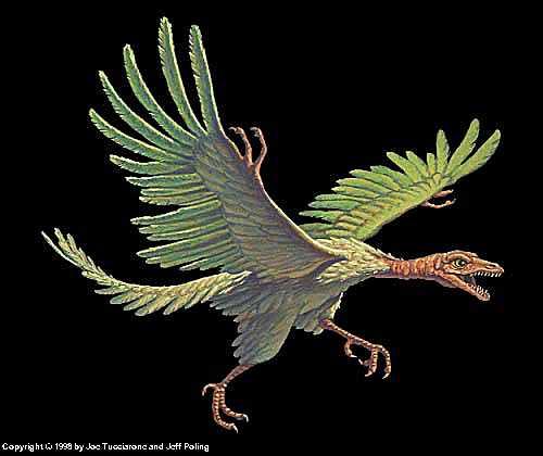 كل شيء عن الدايناصورات بالصور والفيديو 1_3410
