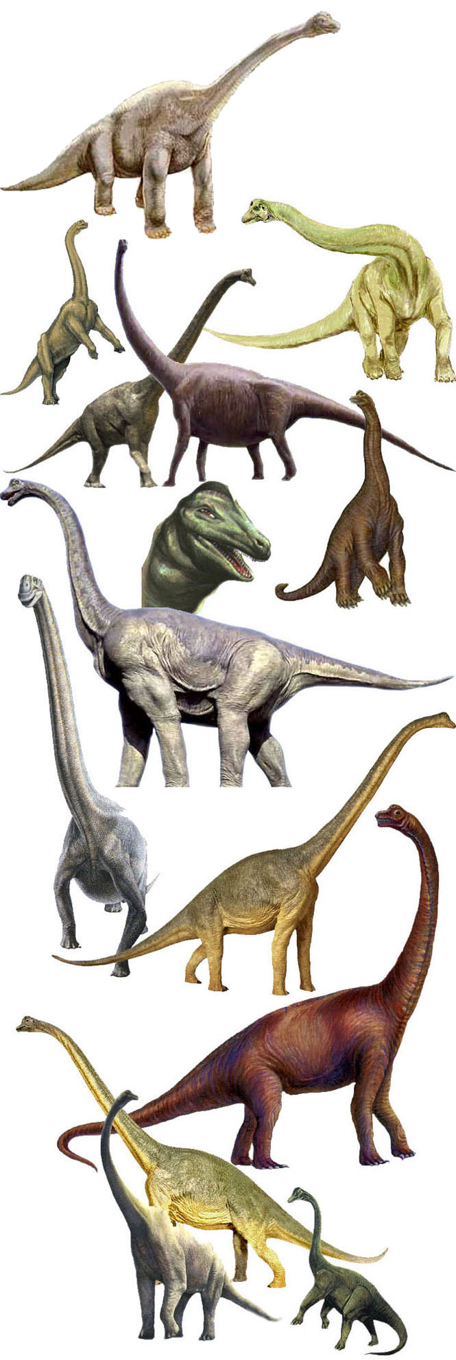 كل شيء عن الدايناصورات بالصور والفيديو - صفحة 2 1_3710