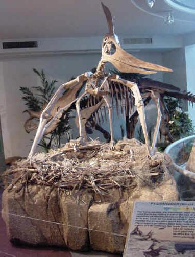 كل شيء عن الدايناصورات بالصور والفيديو 1_5410