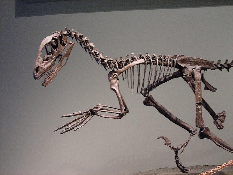 كل شيء عن الدايناصورات بالصور والفيديو 1_611