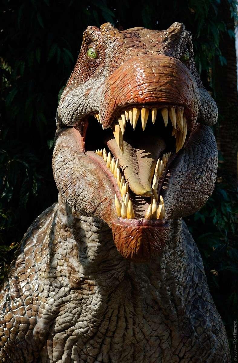كل شيء عن الدايناصورات بالصور والفيديو 1_6111