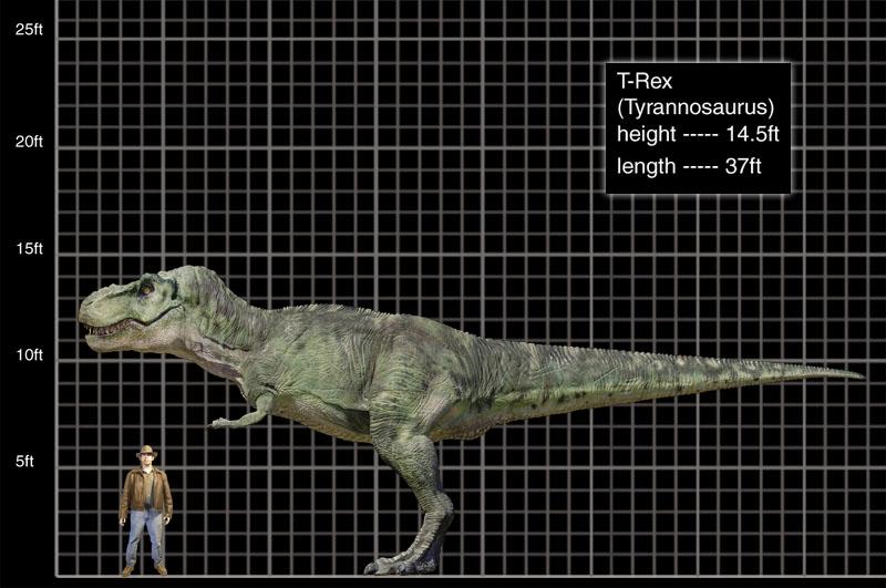 كل شيء عن الدايناصورات بالصور والفيديو 1_6910