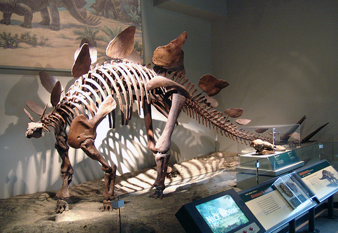كل شيء عن الدايناصورات بالصور والفيديو 1_7811