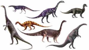 كل شيء عن الدايناصورات بالصور والفيديو Carnos14