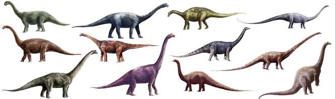 كل شيء عن الدايناصورات بالصور والفيديو Carnos15