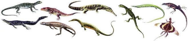 كل شيء عن الدايناصورات بالصور والفيديو Carnos27