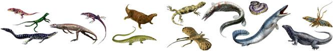 كل شيء عن الدايناصورات بالصور والفيديو Carnos29