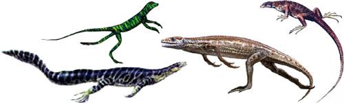 كل شيء عن الدايناصورات بالصور والفيديو Carnos30