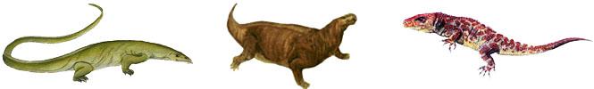 كل شيء عن الدايناصورات بالصور والفيديو Carnos31