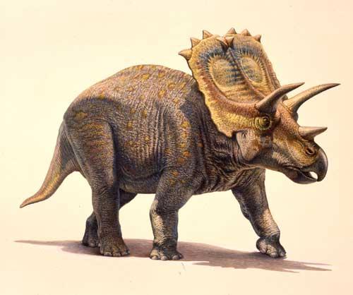 كل شيء عن الدايناصورات بالصور والفيديو Carnos34
