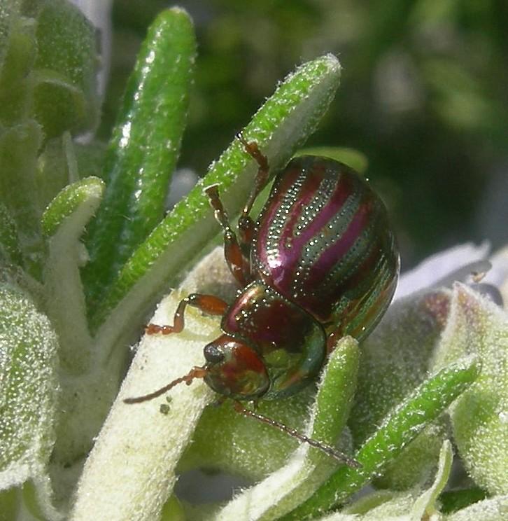 [Divers insectes] Echantillon Dscn5811
