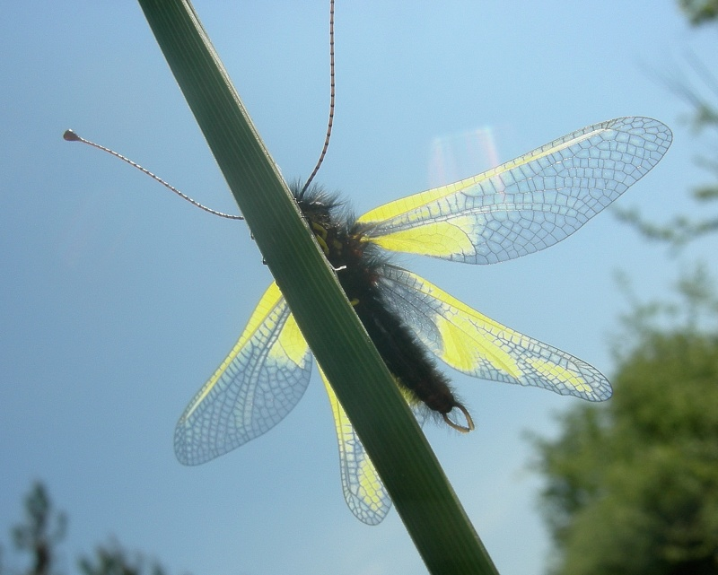 [Divers insectes] Echantillon Dscn6217