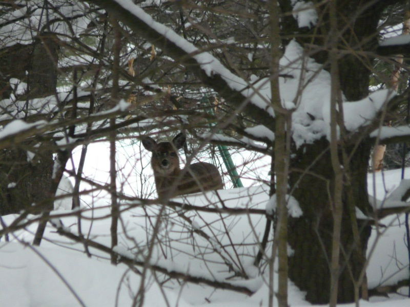 chasse photo 1er février P1000410