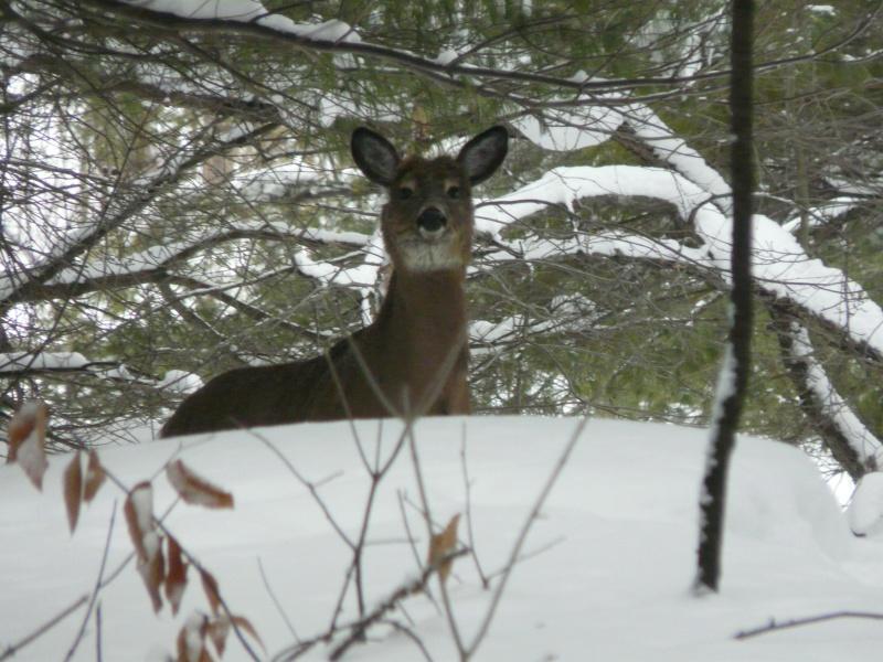 chasse photo 1er février P1000411