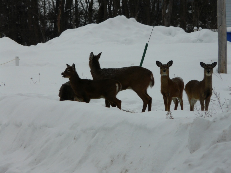 chasse photo 1er février P1000412