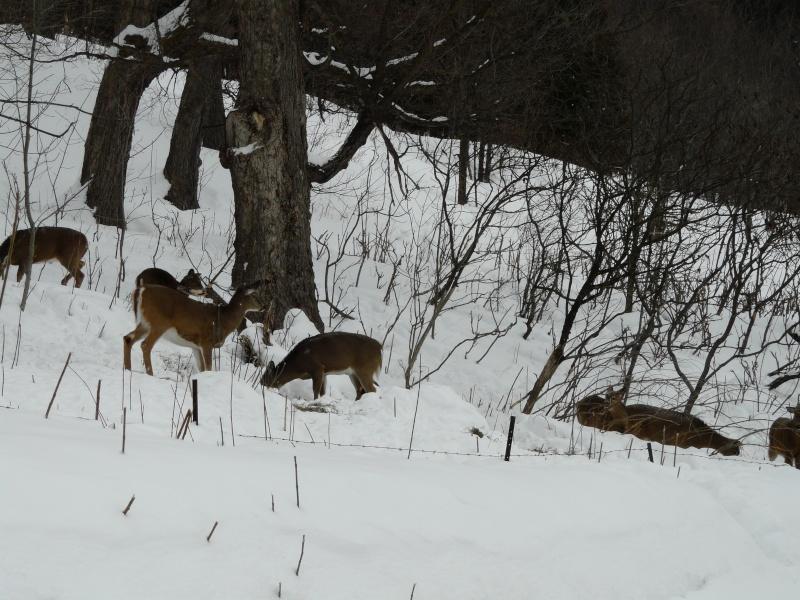 chasse photo 1er février P1000413