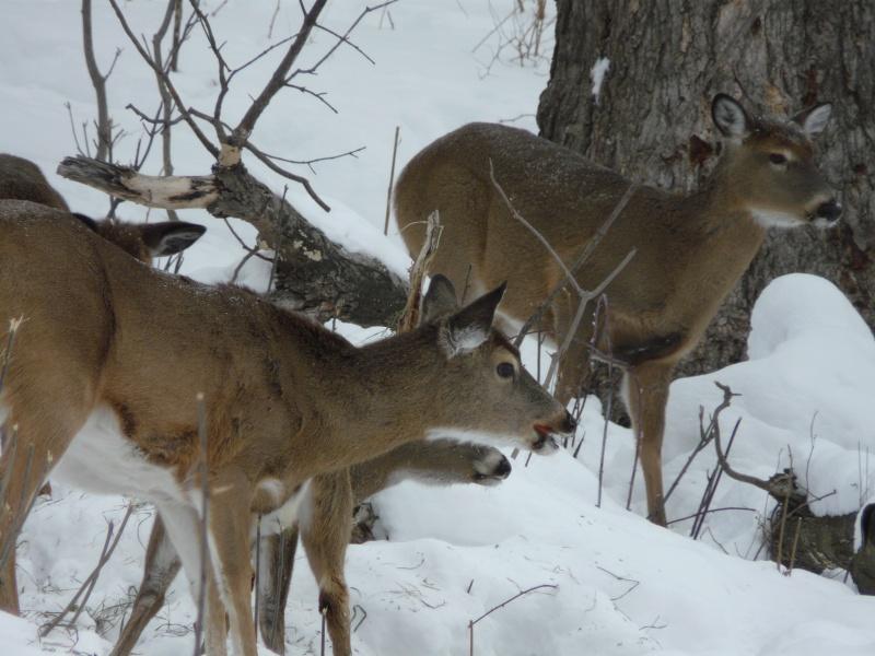 chasse photo 1er février P1000414