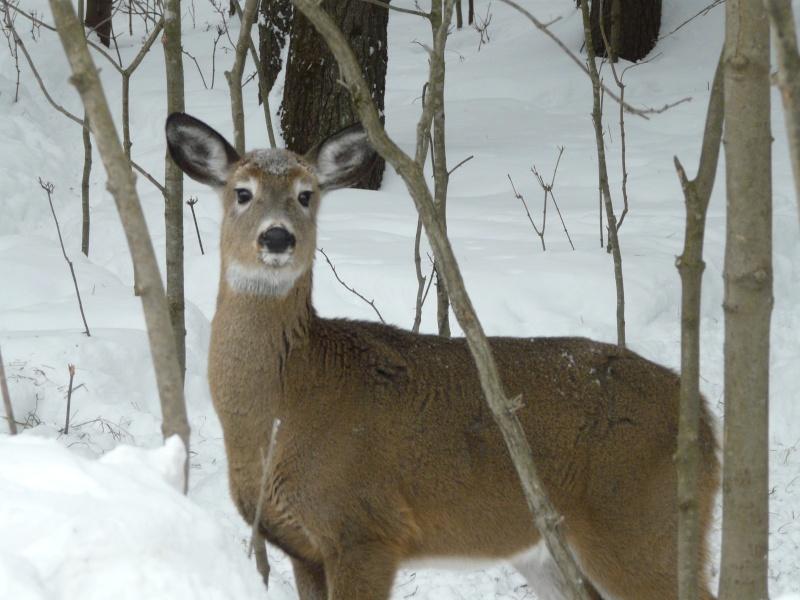 chasse photo 1er février P1000415