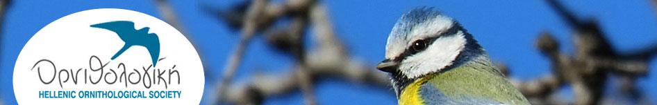 forum d'oiseaux !fleur En_typ10