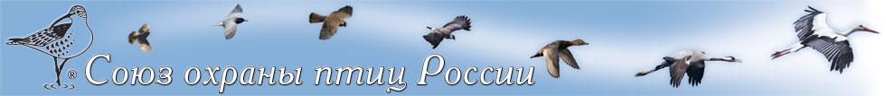 forum d'oiseaux !fleur Shapka10