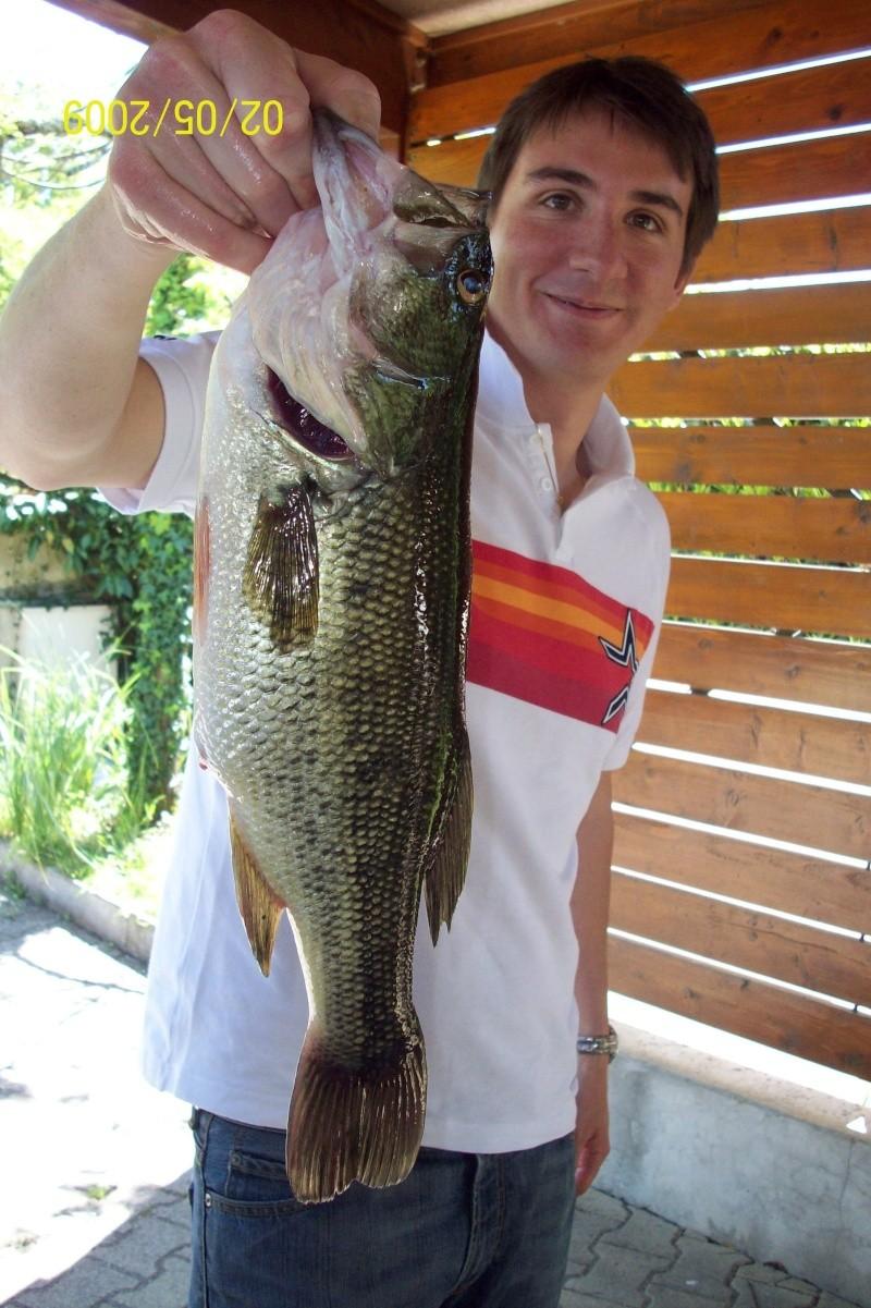 Les Astros Fish ! 110_0211