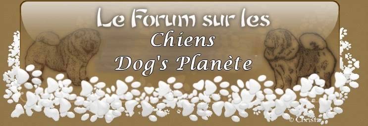 Dogs'Planete