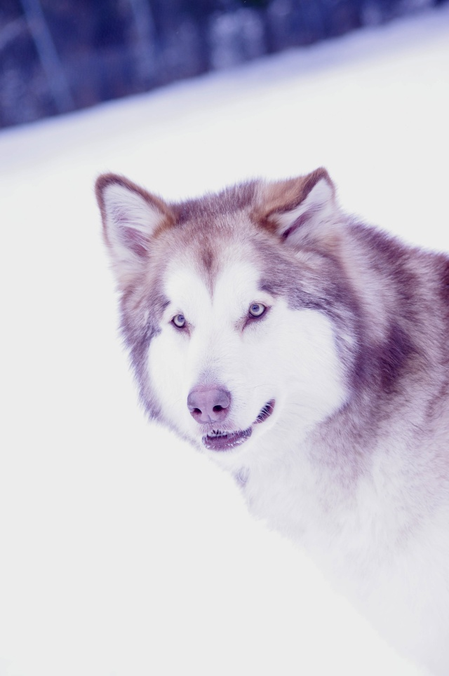 Un loup qui a un fouttu regard... Imgp1811