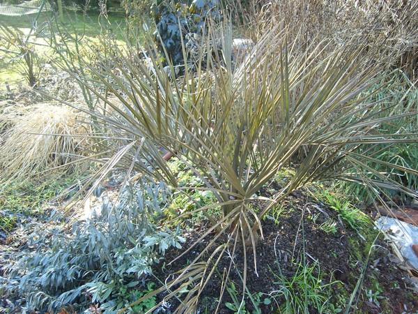 Zone 6 (-20°C) pour mon jardin cet hiver! Gel310