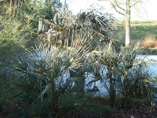 Zone 6 (-20°C) pour mon jardin cet hiver! Gel410