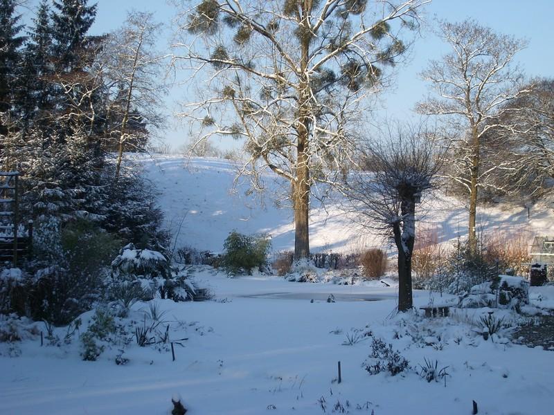 Zone 6 (-20°C) pour mon jardin cet hiver! Neige410