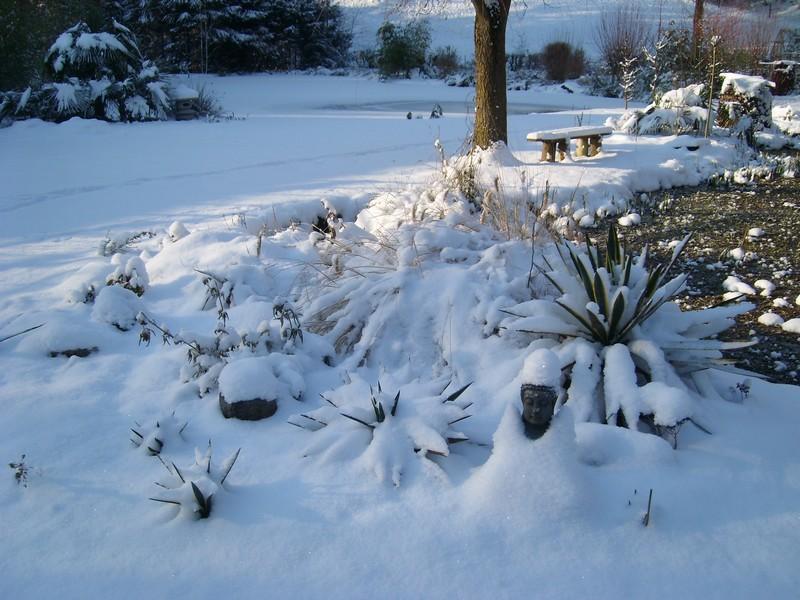Zone 6 (-20°C) pour mon jardin cet hiver! Neige510
