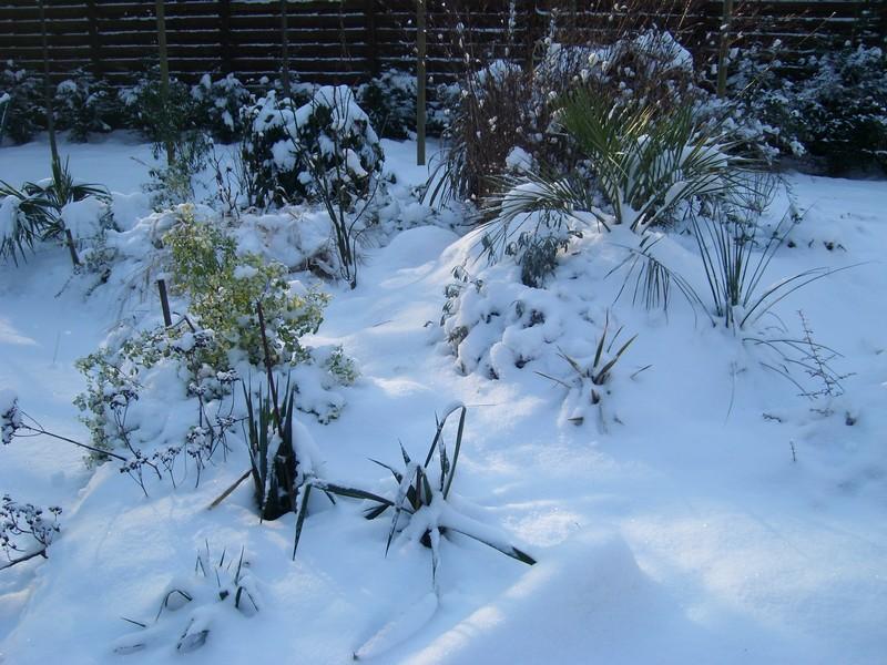 Zone 6 (-20°C) pour mon jardin cet hiver! Neige610